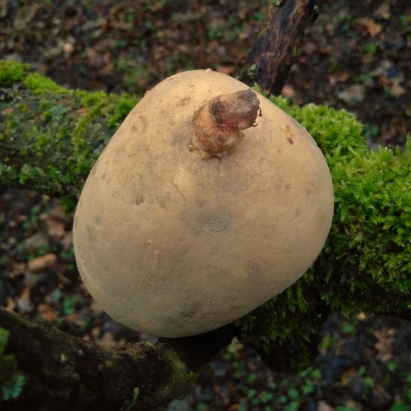 Die Rebounds der AVs - Foto einer Kartoffel v. form:f critical design