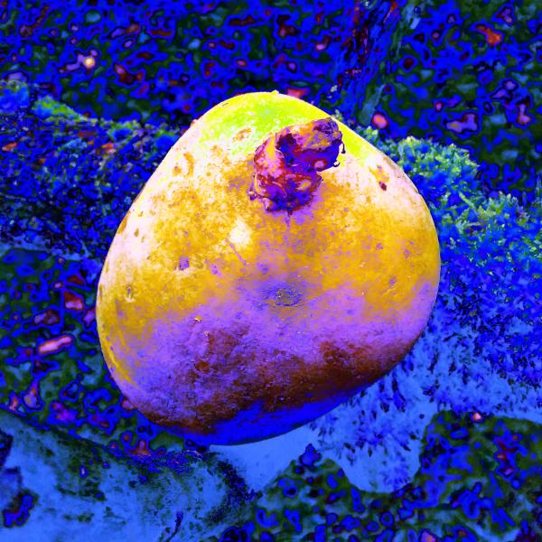 Die Rebounds der AVs, eine Kartoffel verfremdet, blau + gelb / yuyun, form:f - critical design