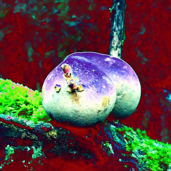 Die Rebounds der AVs, zwei Kartoffeln verfremdet, lila + grün + rot / yuyun, form:f - critical design