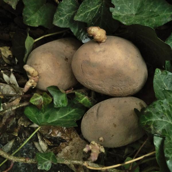 Die Rebounds der AVs - Foto von drei Kartoffeln v. form:f critical design